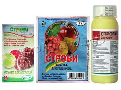 fyngicid-strobi2