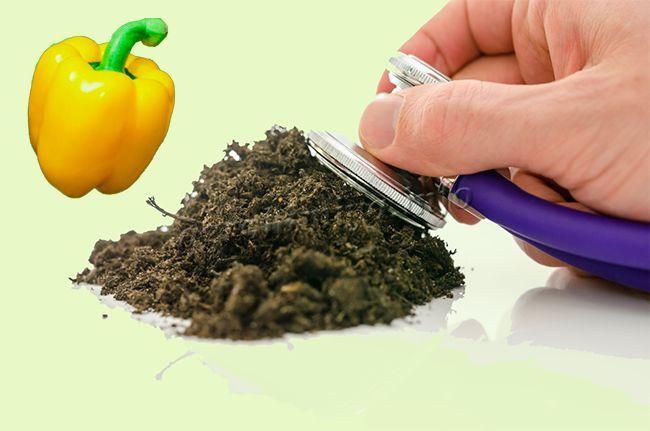 Как подготовить почву для рассады перца