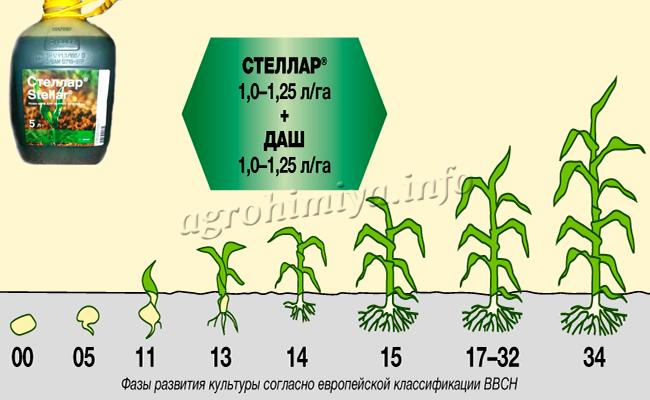 Механизм действия гербицида Стеллар