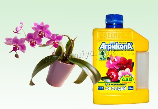 Удобрение Агрикола для орхидей