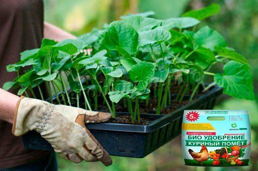 Удобрение рассады органическими удобрениями