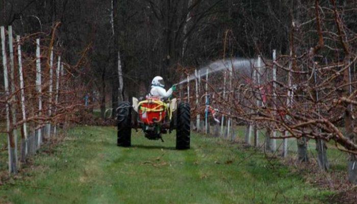 Весенняя обработка яблонь от парши
