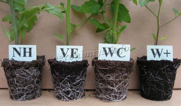 Влияние почв на рост растений