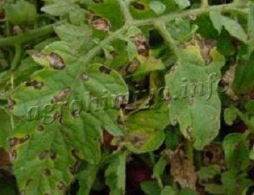 заболевание листьев