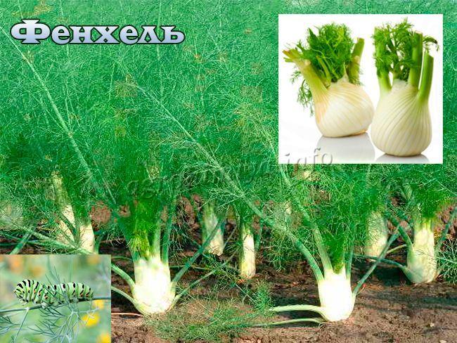 Выращивание бороды миноксидил 28