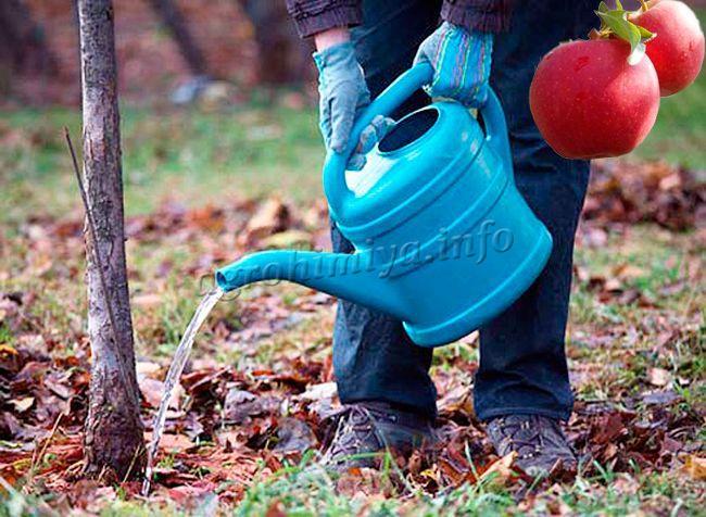 Как правильно поливать яблоню?