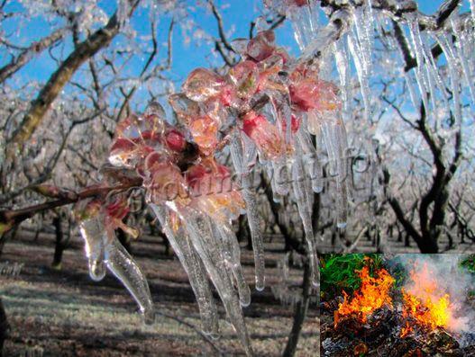 Как защитить деревья от заморозков весной?