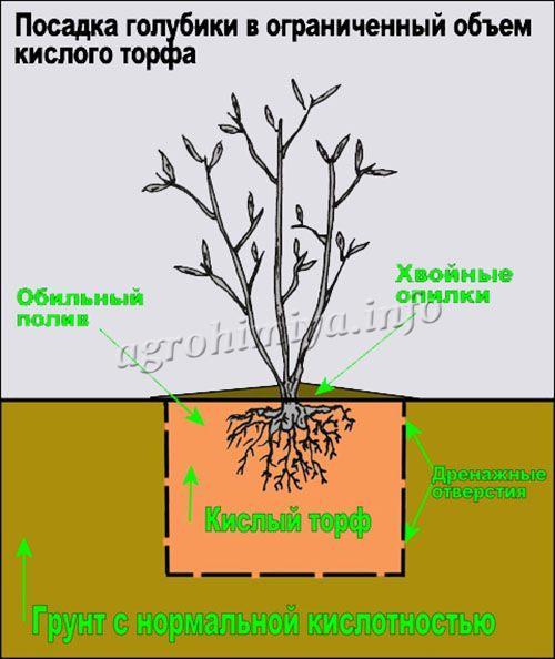 Подкисление почвы при посадке
