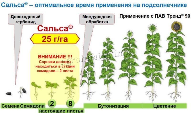 Время применения гербицида