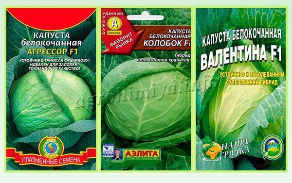 Гибридные зимние сорта капусты