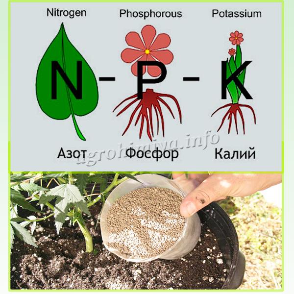 Основу удобрения Нитрофоска составляют три элемента