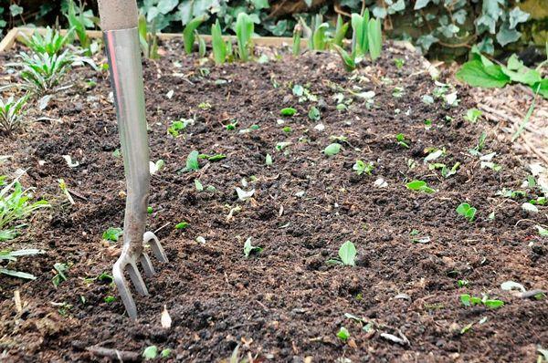 Перед внесением удобрений почву нужно подготовить