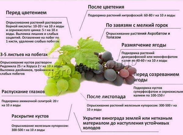 Когда и как подкармливать виноград