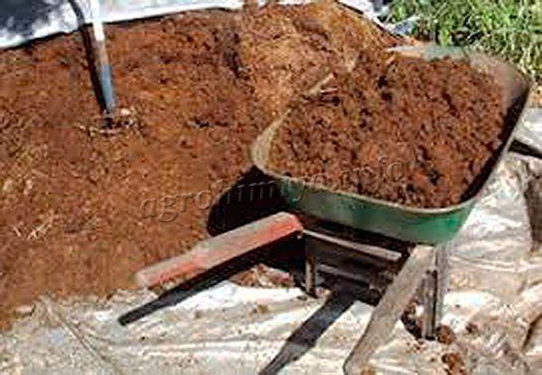 Конский навоз благодаря особенностям состава и легкости является отличным разрыхлителем для тяжелых почв