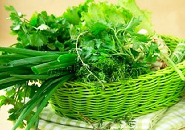 Сохраняют на зиму, как правило, привычные для всех травы: петрушка, мята, укроп, базилик, сельдерей