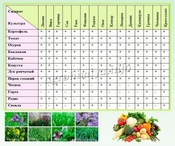 Совместимость сидеритов и овощей