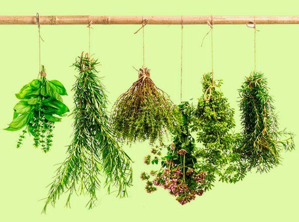 Сушеная зелень отличается сильным ароматом, за что и ценится в кулинарии