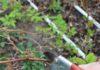 Фото обрезки малины