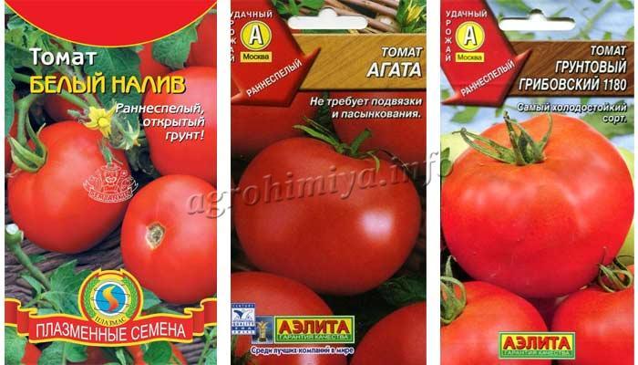 Фото томатов для открытого грунта