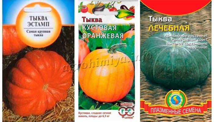 Фото тыквы Эстамп, Кустовая оранжевая, Лечебная