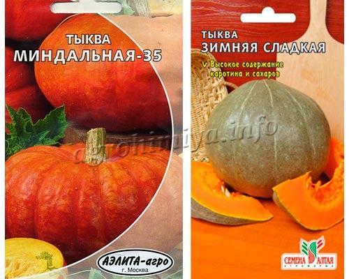 Фото тыквы Миндальная-35 и Зимняя Сладкая