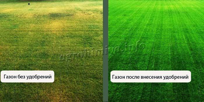 Фото газона