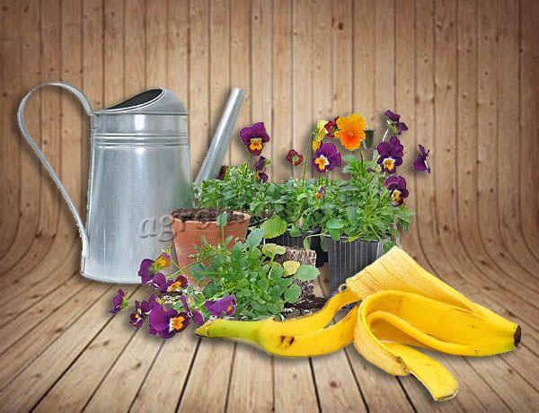 Банановая кожура как удобрение для комнатных растений