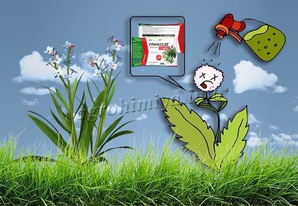 Глифосат находится в числе лидеров по ликвидации многолетних и однолетних сорных трав