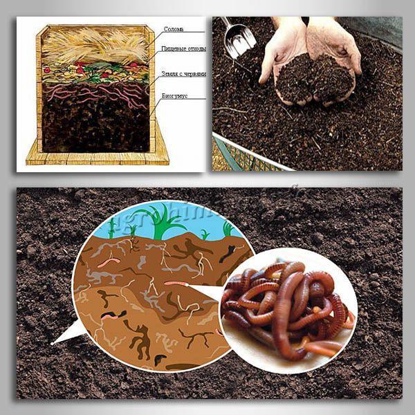 Как сделать биогумус своими руками в домашних условиях