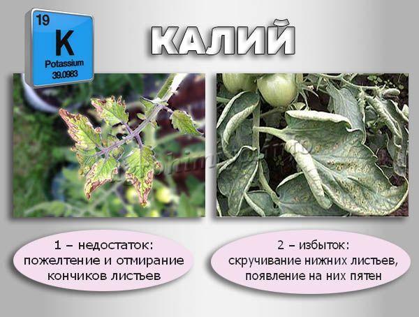 Недостаток и избыток Калия в растениях