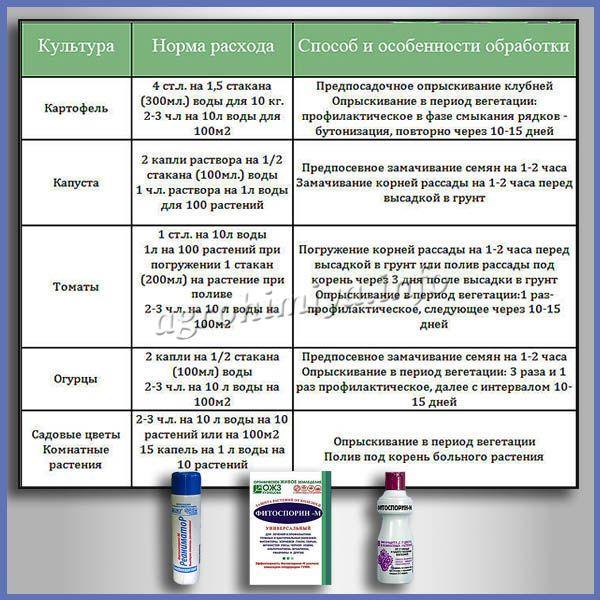 Нормы расхода и особенности обработке Фитоспорином