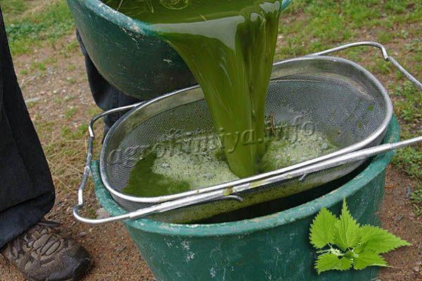 Перед использованием удобрение из крапивы рекомендуется процедить