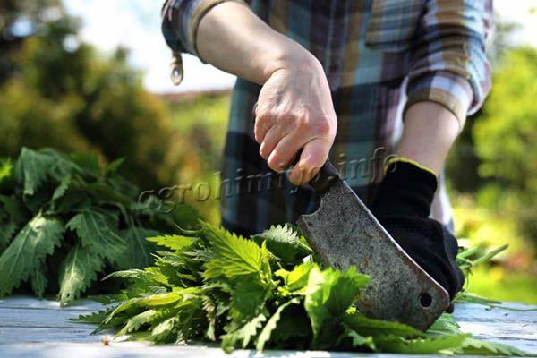 Перед приготовлением удобрения крапиву нужно измельчить