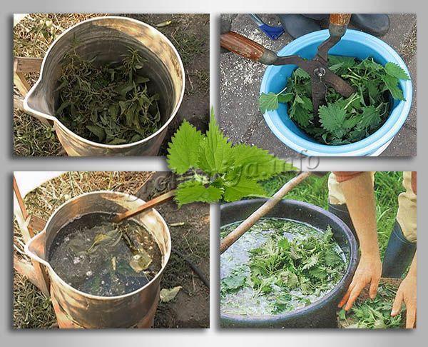 Приготовление удобрения из крапивы