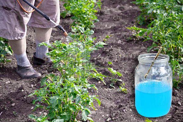 Применение в огородничестве Бордосской жидкости