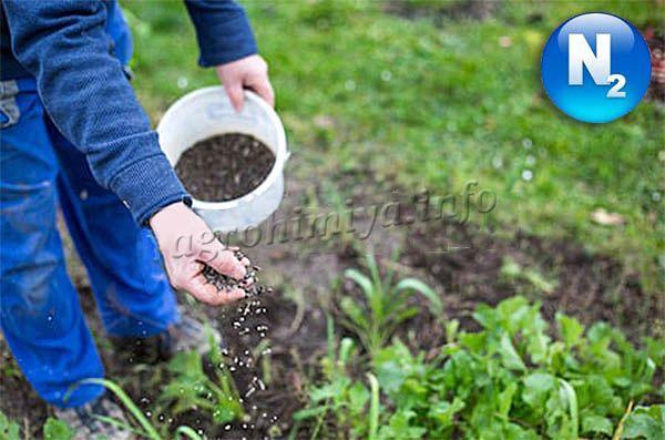 Применение азотных удобрений на приусадебном участке
