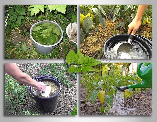 Применение Удобрения из крапивы