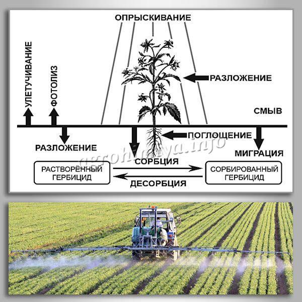 Принцип действия гербицидов