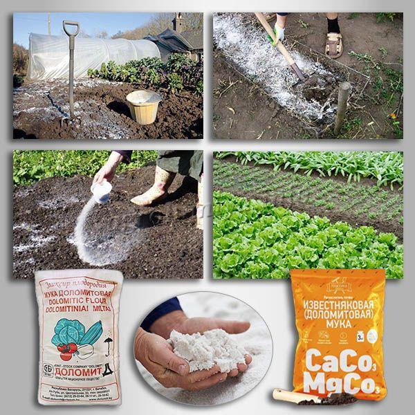 Внесение Доломитовой муки увеличит урожайность