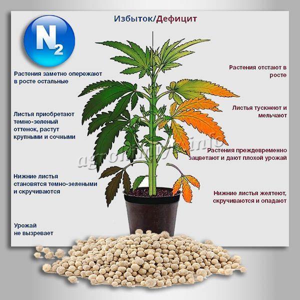 Внешние проявления излишка или дефицита Азота в растениях