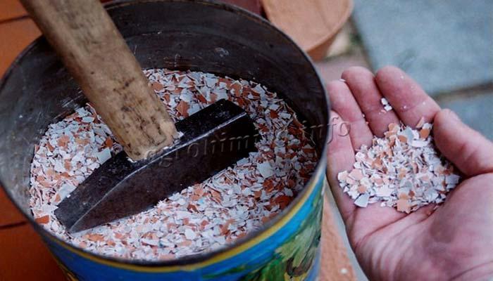 Измельчение яичной скорлупы для приготовления удобрения