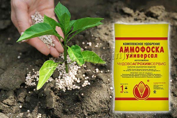 Аммофоска применяется так же как подкормка уже растущих растений или при посадке саженцев