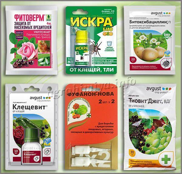 Препараты, которые помогут справиться с паутинным клещом
