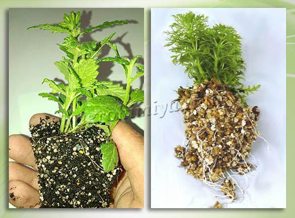 Применение Вермикулита для развития корневой системы рассады