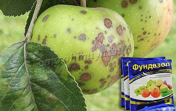 Применение фунгицида Фундазол от парши яблок