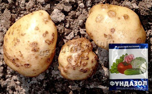 Применение фунгицида Фундазол от ризоктониоза картофеля