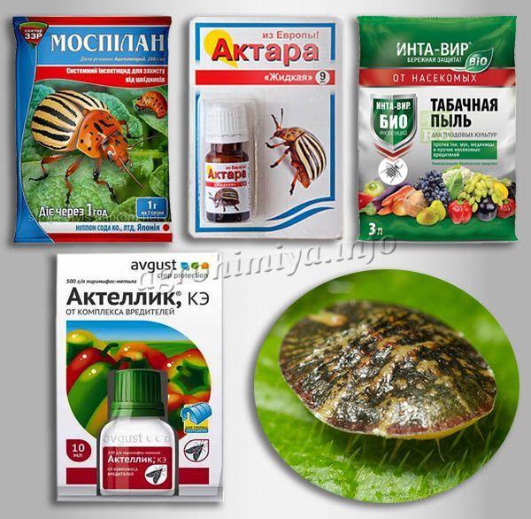 Специализированные препараты от щитовок