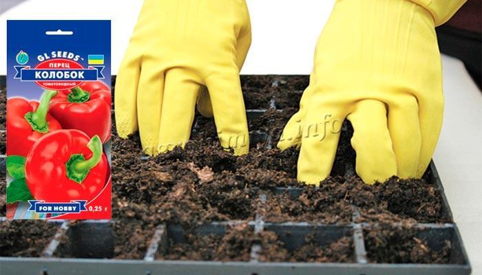 Подготовка грунта к посадке семян перца в касеты