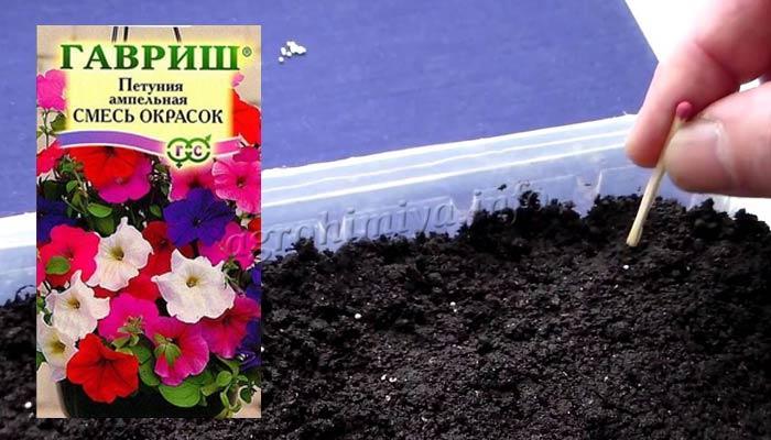 Фото посадки семян петунии на рассаду