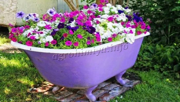 Фото цветущей петунии в старой ванной